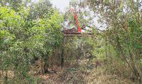 บ้านเดี่ยวหลุดจำนอง ธ.ธนาคารกสิกรไทย พิษณุโลก เมืองพิษณุโลก ท่าทอง